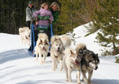Dogsledding Bigfork Montana